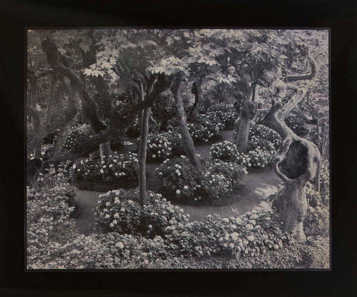 Villa Aldobrandini, Frascati, Italy. 49,9 x 59,8 cm